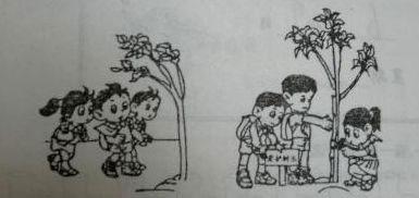 爱护树木看图写话(带拼音)